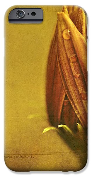 Recollection iPhone Case by Bonnie Bruno