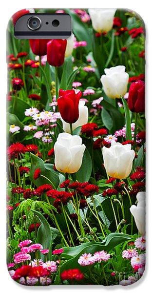 Canada Photograph iPhone Cases - Red and White Tulips with Red and Pink English Daisies in Spring iPhone Case by Louise Heusinkveld