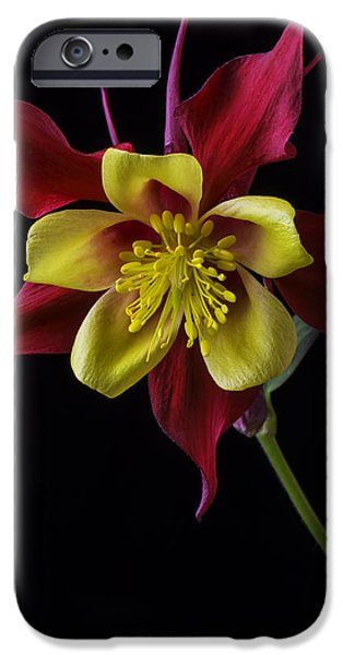 Close Up Floral iPhone Cases - Red and Yellow Columbine Flower iPhone Case by Garry Gay