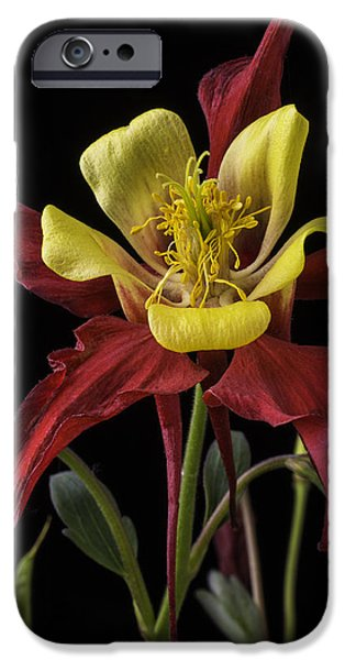 Columbine iPhone Cases - Red and Yellow Columbine iPhone Case by Garry Gay