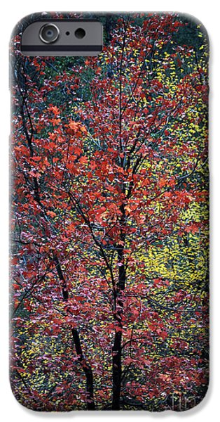 West Fork iPhone Cases - Red and Yellow Leaves Abstract Vertical Number 1 iPhone Case by Heather Kirk