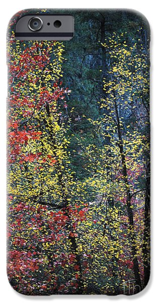 West Fork iPhone Cases - Red and Yellow Leaves Abstract Vertical Number 2 iPhone Case by Heather Kirk