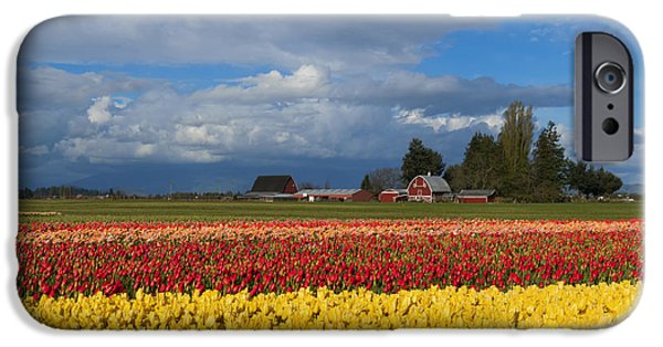Red Barn iPhone Cases - Red Barn Tulip Farm iPhone Case by Mike Dawson