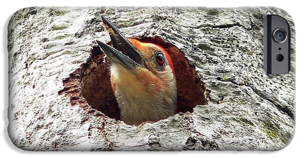 Woodpecker iPhone Cases - Red-bellied Woodpecker 03 iPhone Case by Al Powell Photography USA