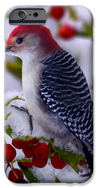 Snow iPhone Cases - Red Bellied Woodpecker iPhone Case by Ron Jones