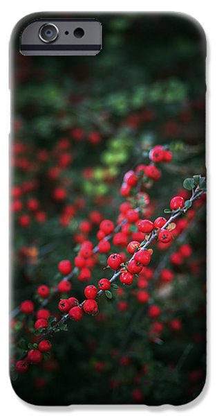 Autumn iPhone Cases - Red berries in the forest iPhone Case by Vishwanath Bhat