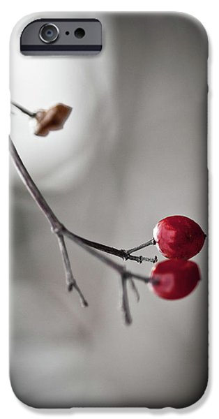 Remnant iPhone Cases - Red Berries iPhone Case by Mandy Tabatt