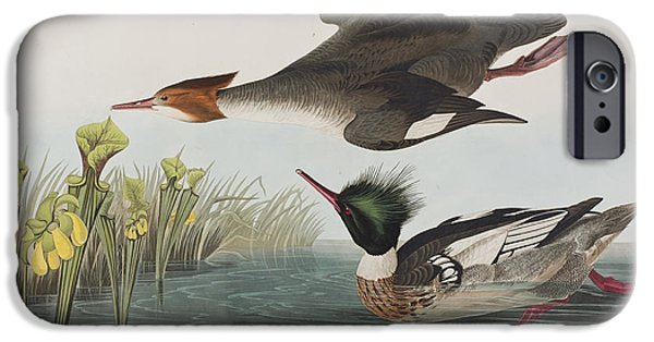 Audubon iPhone Cases - Red-breasted Merganser iPhone Case by John James Audubon