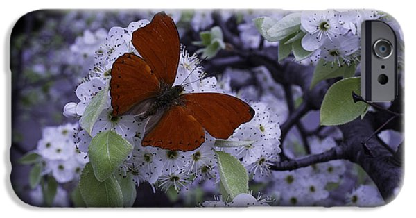 Flight iPhone Cases - Red Butterfly On Cherry Blossoms iPhone Case by Garry Gay