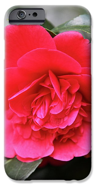Red Camellia iPhone Case by Dean  Triolo
