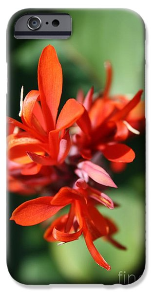 Red Canna Flower iPhone Case by John W Smith III