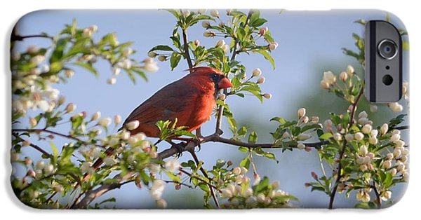 Arkansas iPhone Cases - Red Cardinal Flowering Tree iPhone Case by Nava  Thompson