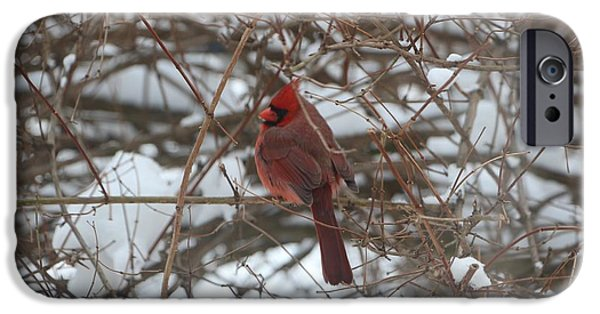 Wintertime iPhone Cases - Red Cardinal in the Winter iPhone Case by Jari Hawk