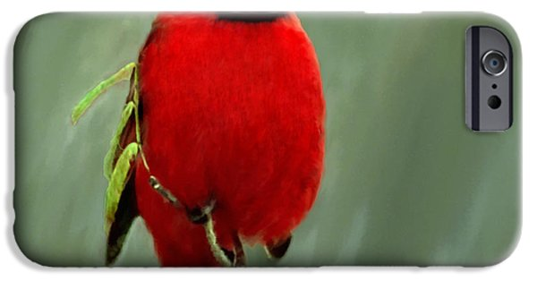 Christmas Greeting iPhone Cases - Red Cardinal Painting iPhone Case by  Bob and Nadine Johnston