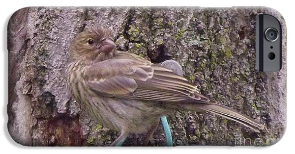 Crossbill iPhone Cases - Red Crossbill Female  Indiana  Summer iPhone Case by Rory Cubel