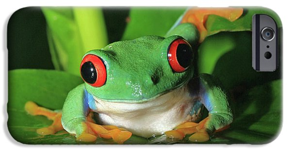 David iPhone Cases - Red Eyed Tree Frog iPhone Case by David Freuthal