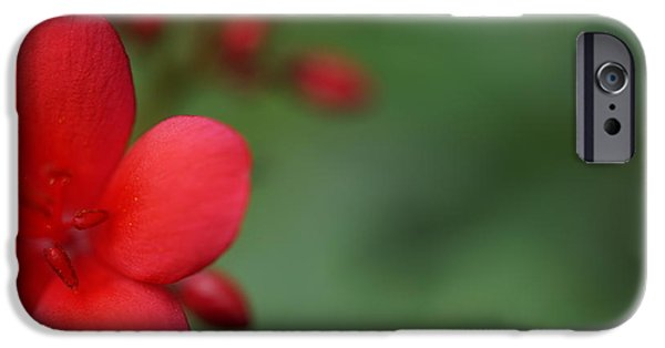 Garden Tapestries - Textiles iPhone Cases - Red Flower iPhone Case by Faashie Sha