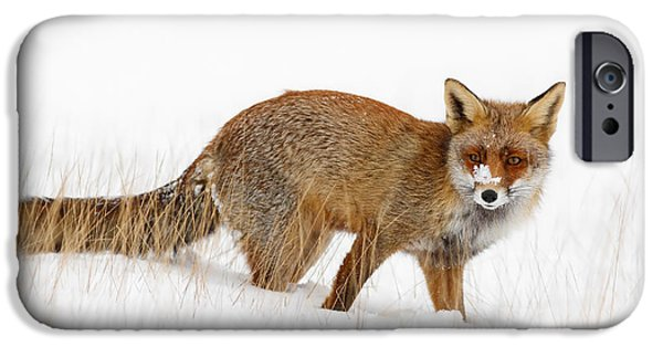 Fox iPhone Cases - Red Fox in a Snow Covered Scene iPhone Case by Roeselien Raimond