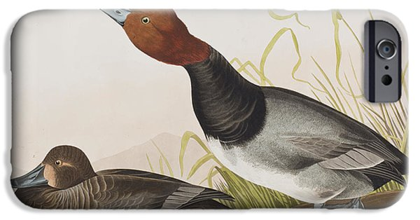 Red Drawings iPhone Cases - Red-headed Duck iPhone Case by John James Audubon