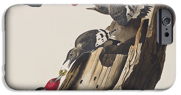 Red Drawings iPhone Cases - Red headed Woodpecker iPhone Case by John James Audubon