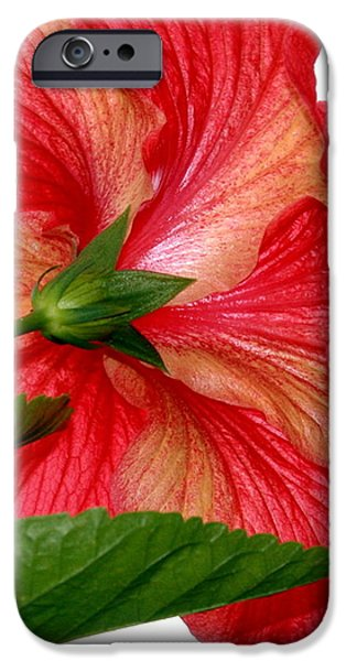 D.c. iPhone Cases - Red Hibiscus  iPhone Case by Craig Chambers