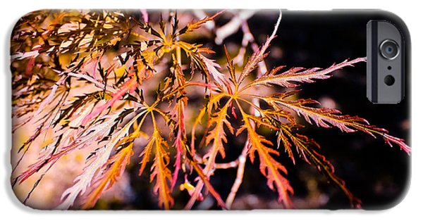 Design iPhone Cases - Red Japanese Maple Leaves iPhone Case by Colleen Kammerer