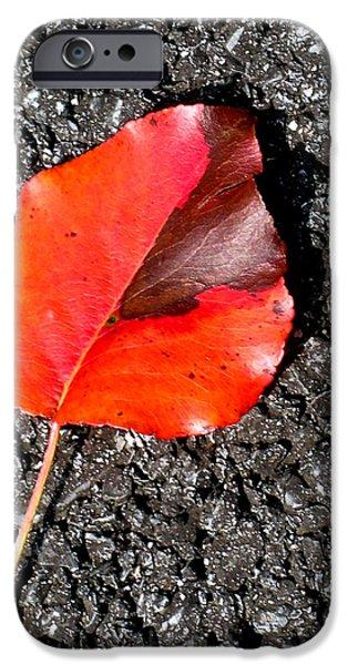 Asphalt iPhone Cases - Red Leaf on Asphalt iPhone Case by Douglas Barnett