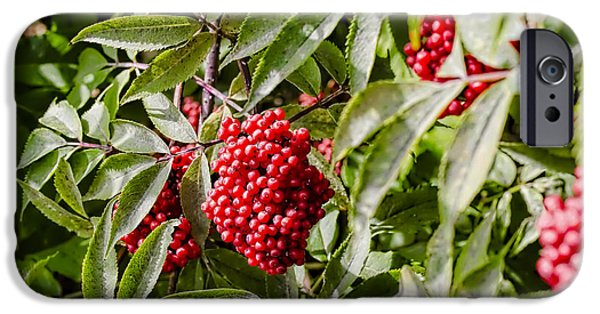 Berry iPhone Cases - Red iPhone Case by Leif Sohlman