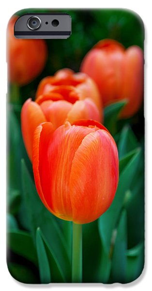 Spring Photographs iPhone Cases - Red Lilies iPhone Case by Az Jackson