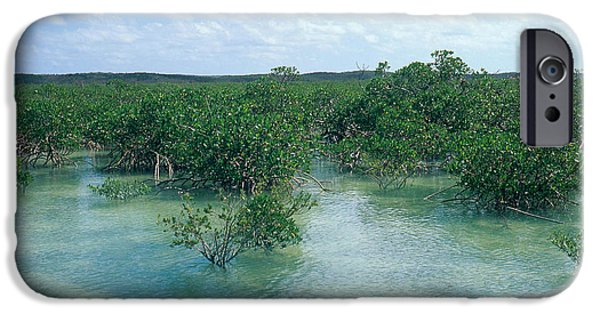Rhizophora Mangle iPhone Cases - Red Mangrove Forest iPhone Case by John Kaprielian