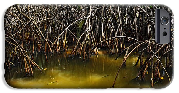 Rhizophora Mangle iPhone Cases - Red Mangrove Prop Roots iPhone Case by Robert Grauer