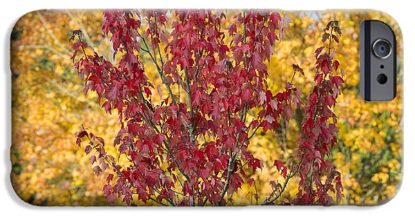 Fall iPhone Cases - Red Maple Autumn  iPhone Case by Tim Gainey