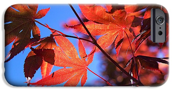 Red iPhone Cases - Red Maple iPhone Case by Rona Black