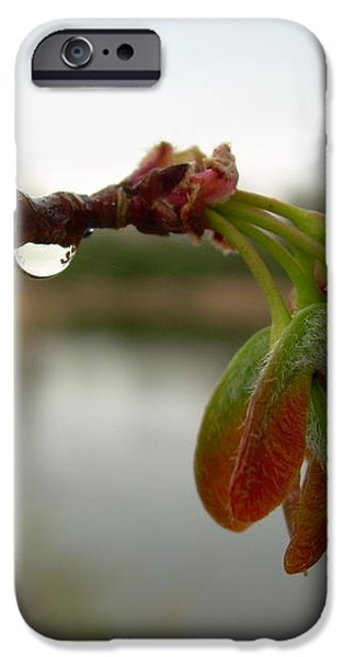 Red Maple Seed Pods at Dawn iPhone Case by Kent Lorentzen