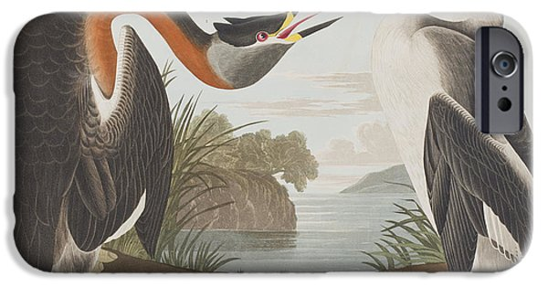 Red Drawings iPhone Cases - Red Necked Grebe iPhone Case by John James Audubon