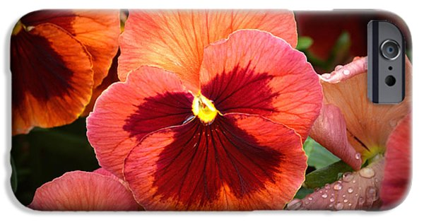 Floral Photographs iPhone Cases - Red Pansy. iPhone Case by Terence Davis