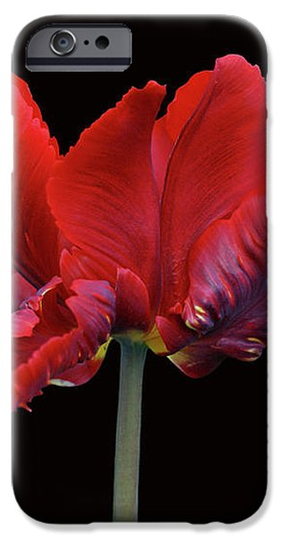 Red Parrot Tulip iPhone Case by Sandy Keeton