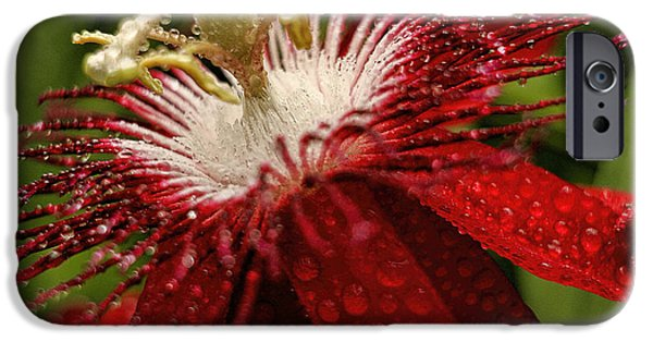 Business iPhone Cases - Red passion flower with rain drops iPhone Case by Geraldine Scull