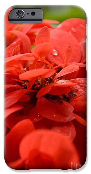 Petals Tapestries - Textiles iPhone Cases - Red Petals iPhone Case by Edna Weber
