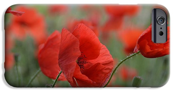 Botanical iPhone Cases - Red Poppies Blooming iPhone Case by Lena Kouneva