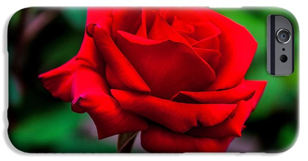 Centre iPhone Cases - Red Rose 2 iPhone Case by Az Jackson