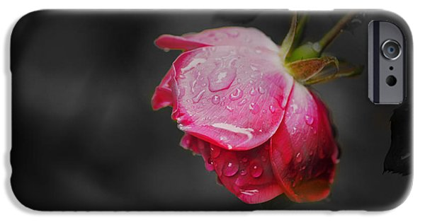 Pleasure iPhone Cases - Red Rose  iPhone Case by Sandra Clark