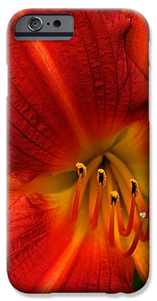 Asiatic Lily iPhone Cases - Red Seduction iPhone Case by John  Poon