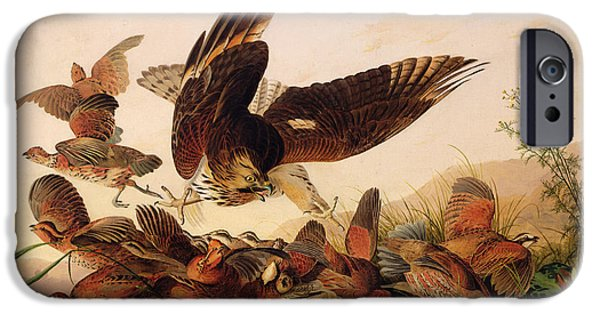 Hawk iPhone Cases - Red Shouldered Hawk Attacking Bobwhite Partridge iPhone Case by John James Audubon