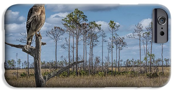 Hawk Art iPhone Cases - Red Shouldered Hawk in the Florida Everglades iPhone Case by Randall Nyhof