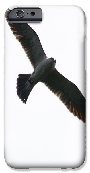 Flight iPhone Cases - Red Shoulders iPhone Case by Alicia Collins