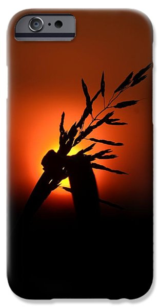 Morning iPhone Cases - Red Sky At Morning iPhone Case by Maria Urso