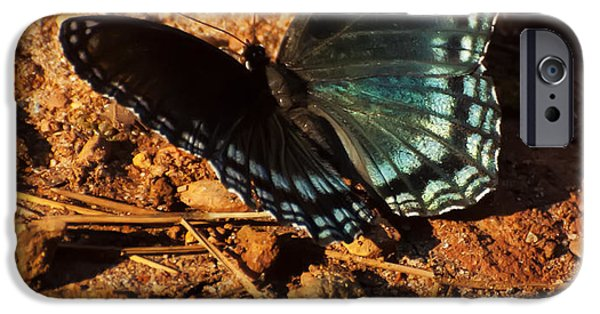 Admiral Digital iPhone Cases - Red Spotted Admiral  iPhone Case by Chris Flees