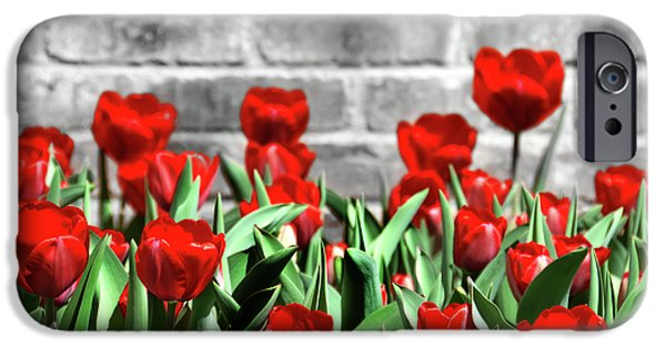Flora Mixed Media iPhone Cases - Red Spring Tulips iPhone Case by Angelina Vick