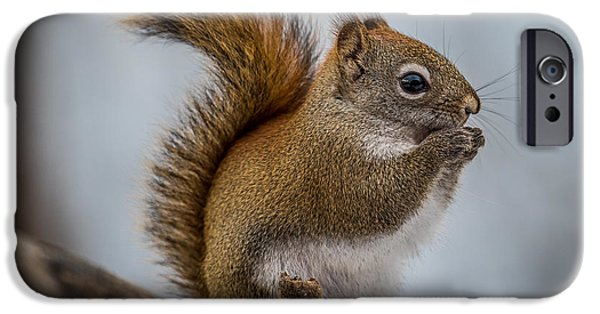 Bushy Tail iPhone Cases - Red Squirrel iPhone Case by Paul Freidlund